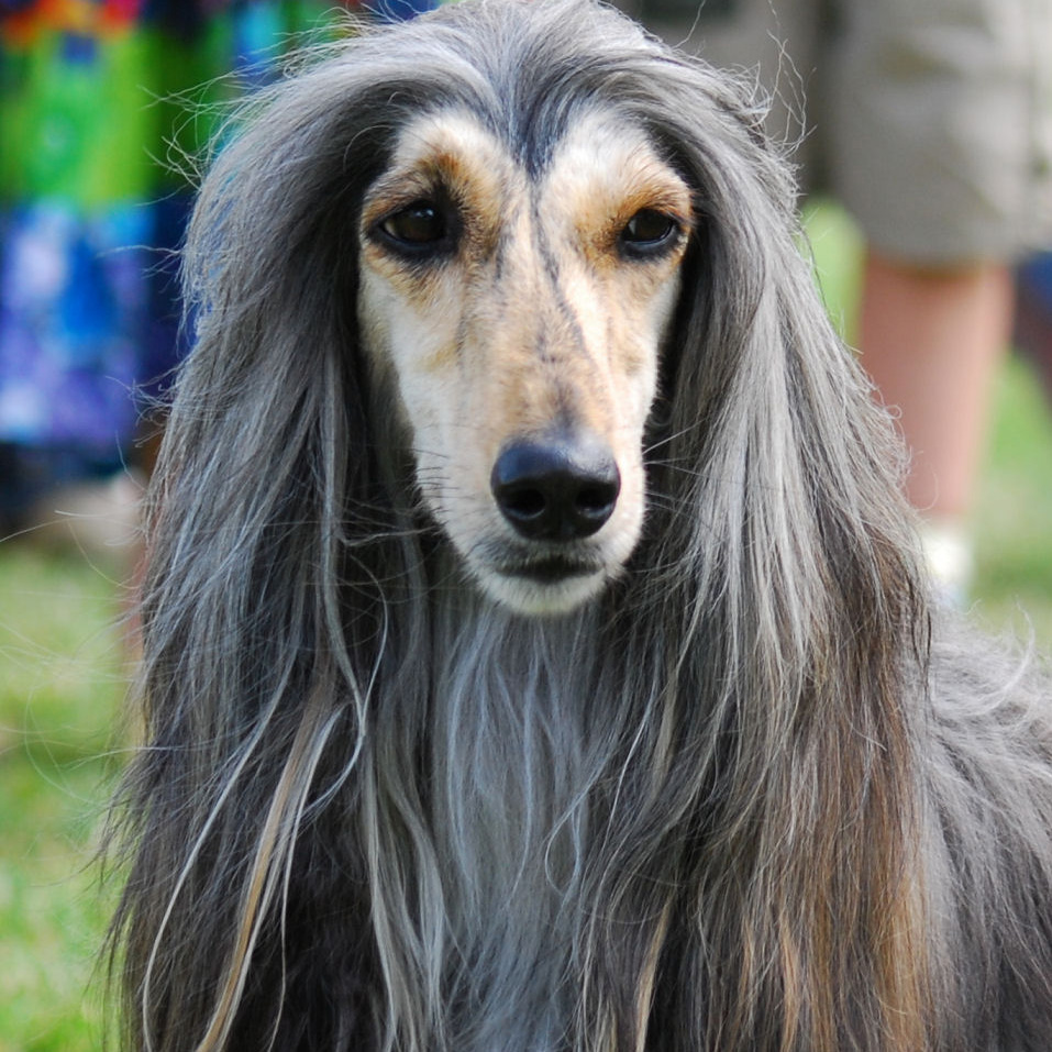 What Medium Dog Breeds Are Good With Cats